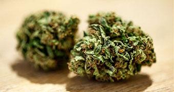A close up of marijuana